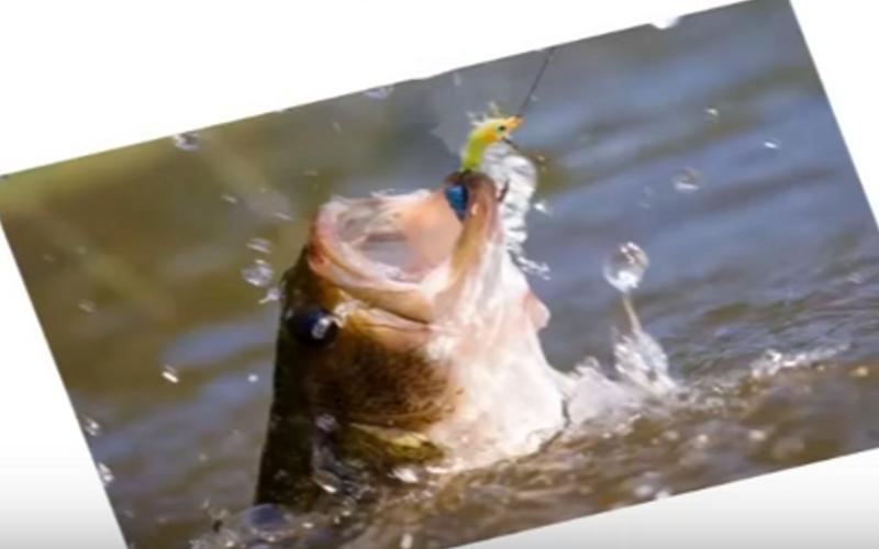 37-funny-fishing-slogans